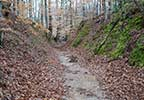 Sunken Trace on the Natchez Trace Parkway