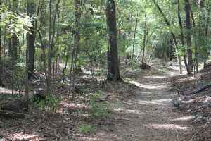 Brashear's Stand and Old Trace - Natchez Trace