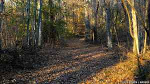 Old Trace Walk - Natchez Trace Parkway