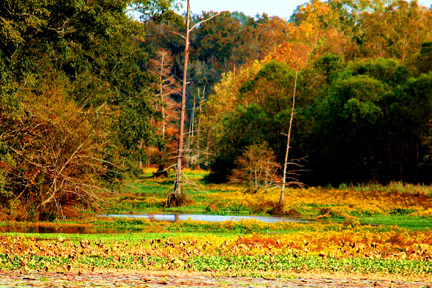 River Bend - Natchez Trace Fall Foliage