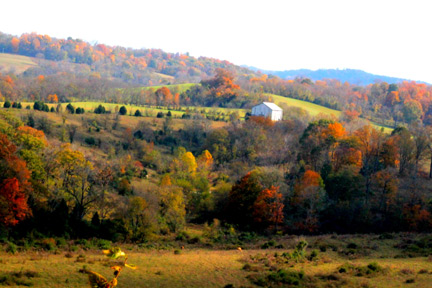 Baker Bluff Overlook - Natchez Trace Fall Foliage