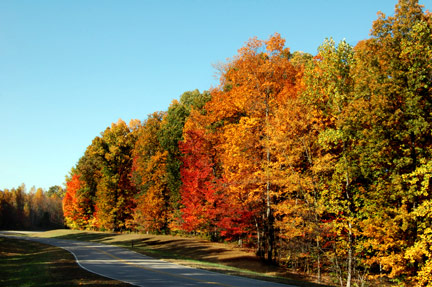 Milepost 425 - Natchez Trace Fall Foliage