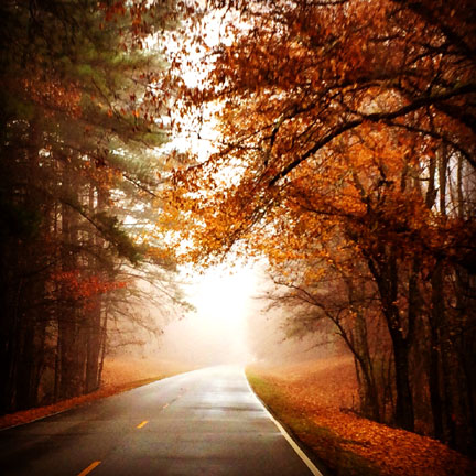 Milepost 310 - Natchez Trace Fall Foliage