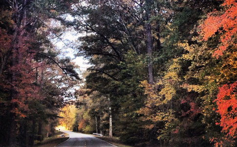Milepost 338 - Natchez Trace Fall Foliage