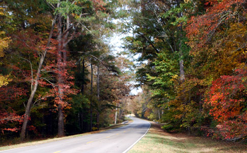Tunnel of Trees near milepost 338 - Natchez Trace Fall Foliage