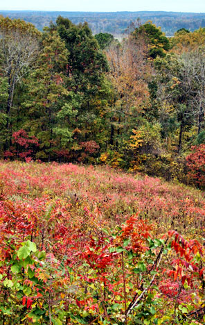 Little Mountain Overlook at Jeff Busby - Natchez Trace Fall Foliage