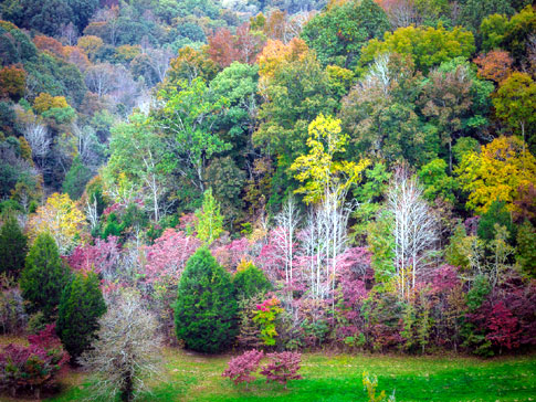 View from Double Arch Bridge - Natchez Trace Fall Foliage