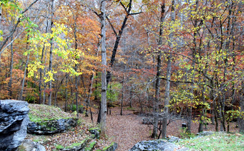 Jacks Branch - Natchez Trace Fall Foliage