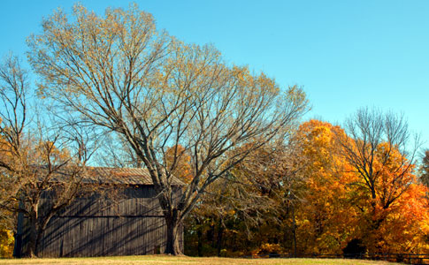 Tobacco Farm - Natchez Trace Fall Foliage