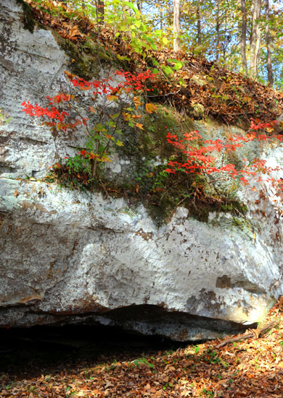 Cave Spring - Mississippi Fall Foliage