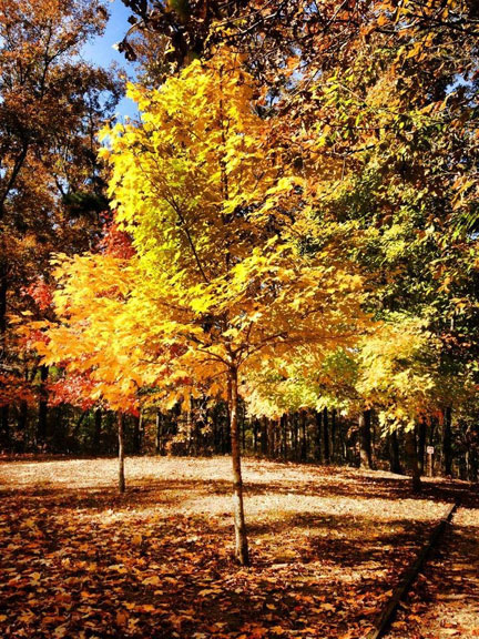 Jeff Busby Park - Mississippi Fall Foliage