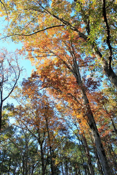 Old Trace at Confederate Gravesites - Mississippi Fall Foliage