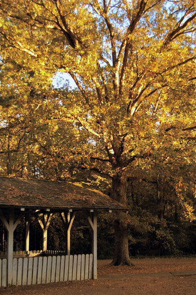 Parkway Information Cabin at Ridgeland - Mississippi Fall Foliage