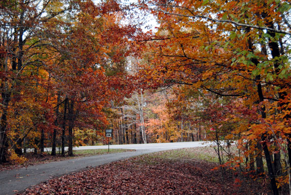 Old Trace Drive - Tennessee Fall Foliage