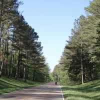 Mississippi - Towering pines shade the parkway at milepost 210.