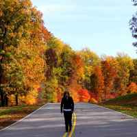 Natchez Trace Parkway: Nashville - Franklin | Fall foliage near milepost 435.