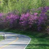 Natchez Trace Parkway: Nashville - Franklin | Biking thru the blooming redbuds.