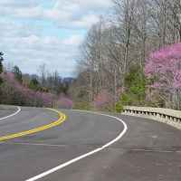 Natchez Trace Parkway: Nashville - Franklin | Redbuds in bloom around milepost 435.