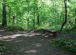 Timberland Park Trails