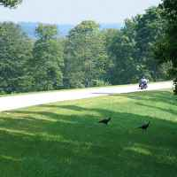 Tennessee - Motorcycles and turkeys near the northern terminus.