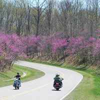 Tennessee - Motorcycles and Redbuds.
