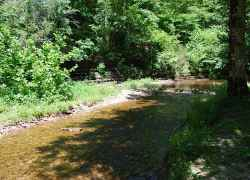 Little Swan Creek - Meriwether Lewis Death & Burial Site