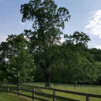 Pasture and Fencing