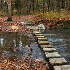 Stepping stones across Colbert Creek.