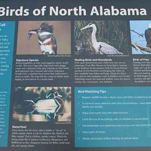 Colbert Ferry area is one of the stops on the Northern Alabama Birding Trail.