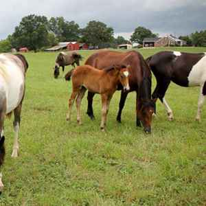 Horses Grazing at Farmhouse Sanctuary Bed and Breakfast - Florence, Alabama
