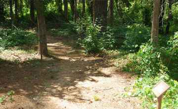 A self-guiding trail leads through a mixed hardwood-pine forest.