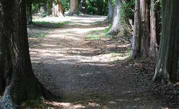 Old Trace Path at Mount Locust