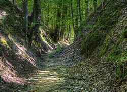 The Sunken Trace on the Natchez Trace Parkway covered in shade.