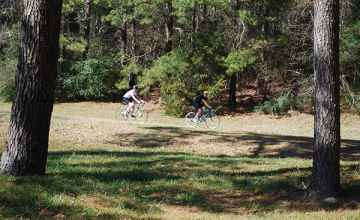 Cyclists biking the Natchez Trace next to the Ross Barnett Reservoir.