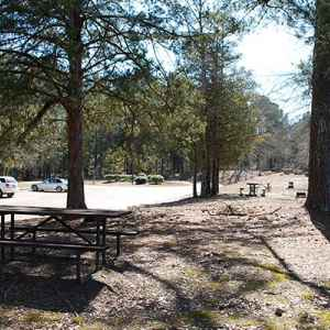 A large picnic area is located next to the information center's parking area.