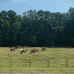 Horse Pasture at French Camp Academy