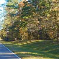 The parkway goes thru the Tombigbee National Forest.