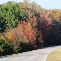 Fall foliage on the parkway near milepost 260.