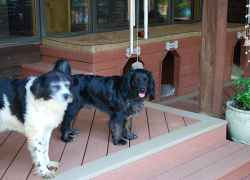 A couple of the dogs waiting for you to come and visit.