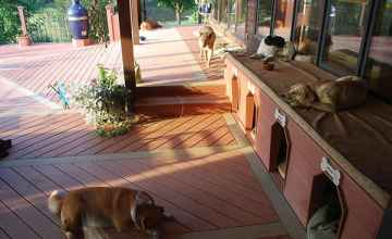 The upstairs deck is the Lazy Dogs' domain but they don't mind if you visit.