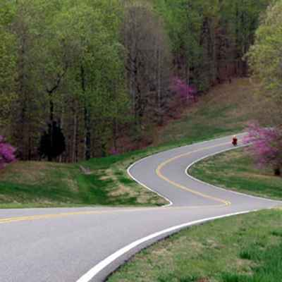 Redbuds starting to bloom on the Natchez Trace near milepost 430.