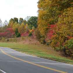 Sumac trees turned red near milepost 435.