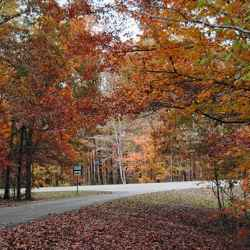 Fall foliage at the end of Old Trace Drive.