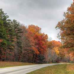 On the Natchez Trace Parkway between between Hohenwald and Lawrenceburg, Tennessee.