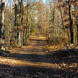 Near the end of fall foliage season at Old Trace Drive - you can see more of the forest.