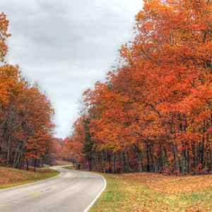Hohenwald - Summertown area: Fall foliage near milepost 375.