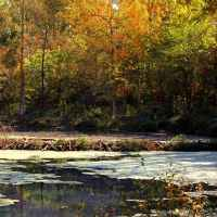 Fall foliage at Rock Spring's beaver pond.