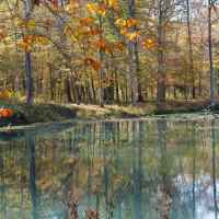 Fall foliage at the beaver pond at the Rock Spring site.