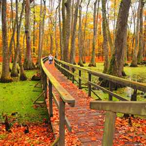 Canton - Ridgeland - Jackson area: Vibrant fall colors at Cypress Swamp.