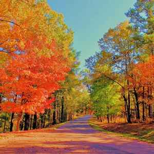 French Camp area: Fall foliage at the Jeff Busby Park site.